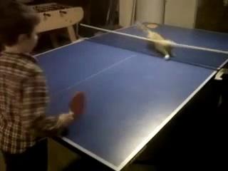 Кошачий теннис